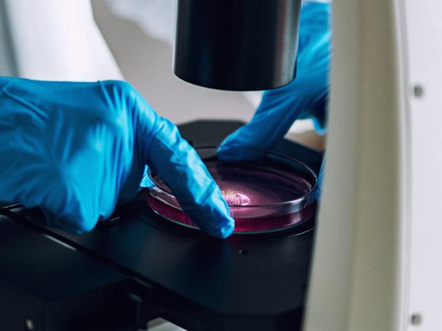 High-quality copper oxide microcrystals for quantum photonics